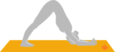 Dolphin Pose.png